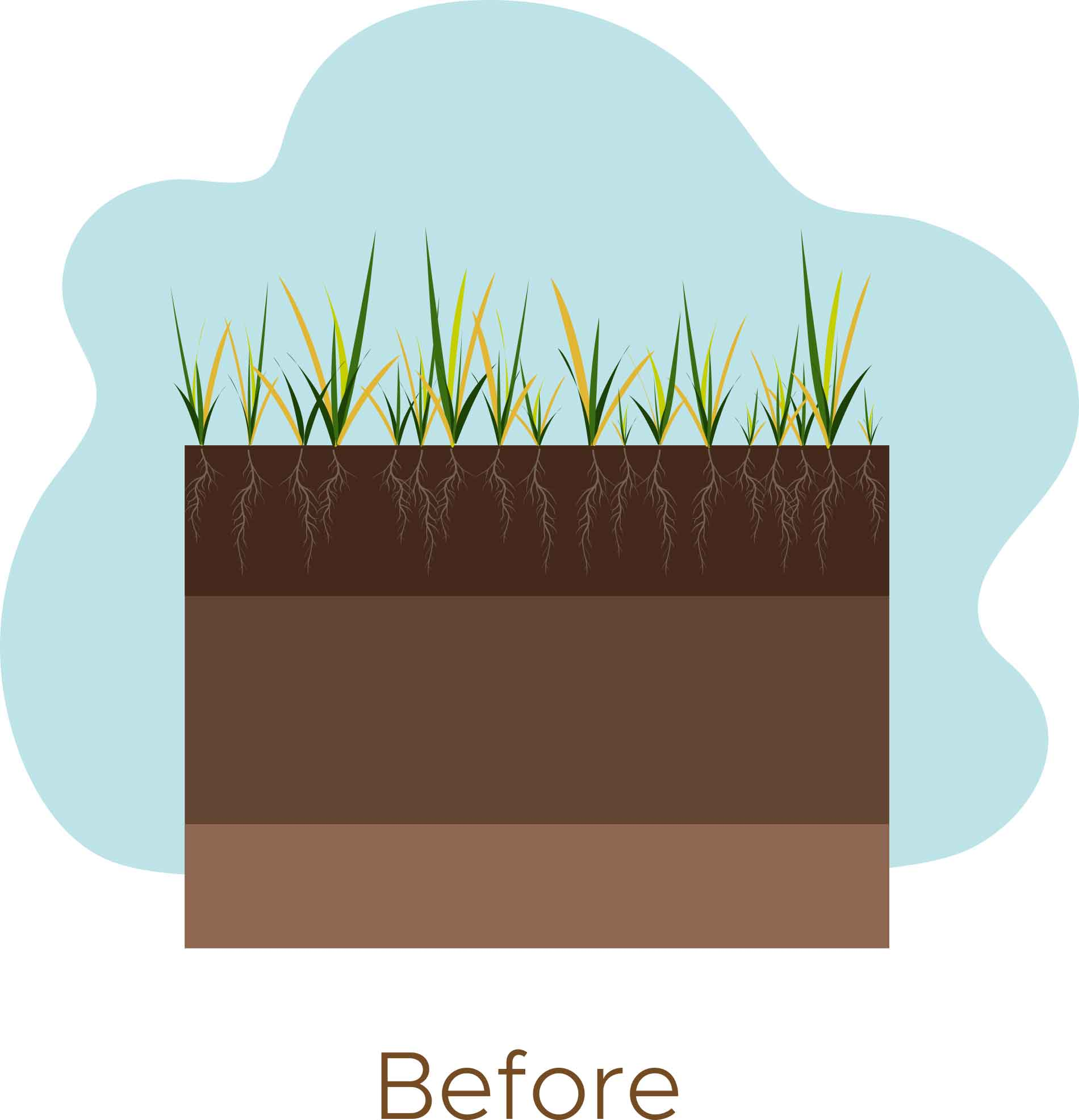 Before Aerating Lawns in Ridgefield CT - A-Z Landscaping LLC