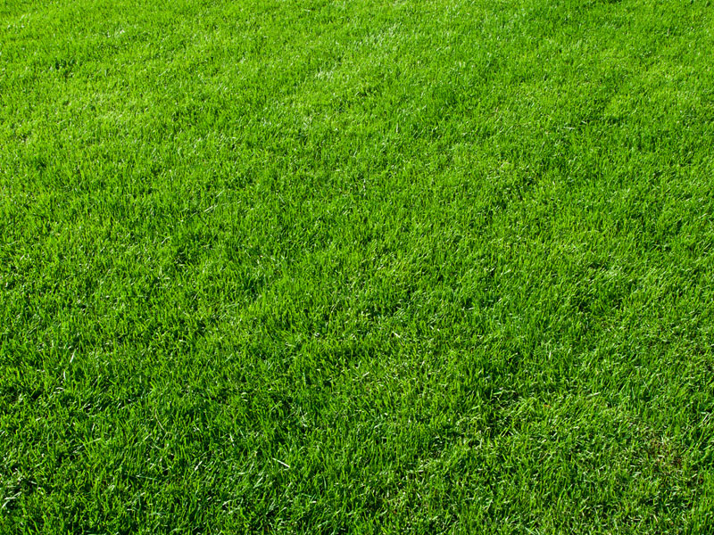 Aerated Lawn - Lush Green Grass - A-Z Landscaping LLC